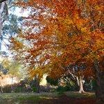 Brilliance of deciduous trees