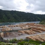 Huge lumber yard near Picton