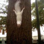 Albino Squirrel in Company's Gardens