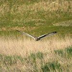 Wildlife around Muswell Manor