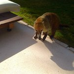 Our coati friend visiting for some snacks