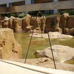Rock pools around swimming pool