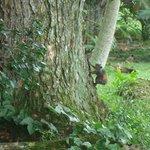 Squirrel - Garden Finca Nora