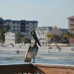 bird sitting by the pier