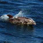 På spaning efter delfiner