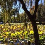 Lotus pond in autumn