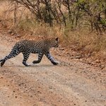 We spotted a leopard in Umfolozi!