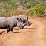 Rhinos in Umfolozi