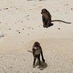 Feeding monkeys on Monkey Island