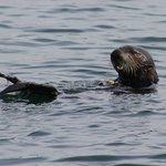 Sea otters start and finish your trip with Blue Ocean!