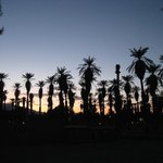 View of palm trees at Furnace Creek Ranch
