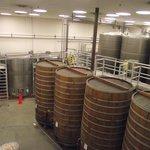 Large oak barrels