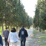 walking up the lane