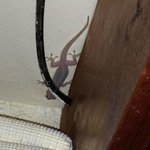 The lizard at ceiling