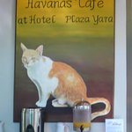 Havana Cafe (named after the resident kitty)