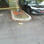 Bottle of urine in parking lot