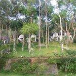 Vue du jardin et des bungalows