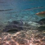 Swimming with the sharks and stingrays
