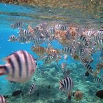A snorkel in the Coral Gardens
