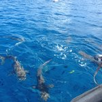 Snorkelling with sharks