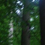 vegetazione foresta nera