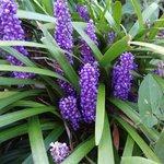 Beautiful unusual flowers