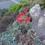 Botanical garden..