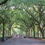 park pathways