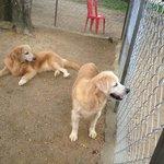 Dog zoo