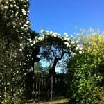 come into the garden under the roses arch