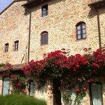 roses over the garden door