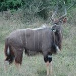 Accommodations visited by Nyala