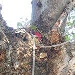 gallina sull'albero