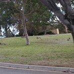 kangaroos at the hotel