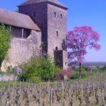 Stunning vineyards