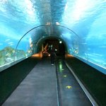 Under the water tunnel