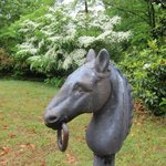 Tryon Horse Country Photo