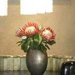 Lovely proteas