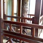 Сосны прорастают сквозь балконы и крыши- охрана природы!