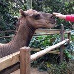 Passeio ZooSafari