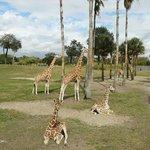 Serengueti Safari