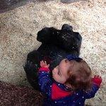 maria com os gorilas!