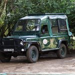 sehr gepflegte Safari-Jeeps