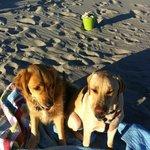 Beach doggies
