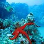 SeaStar fish