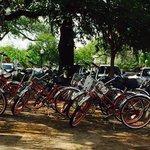 Bikes resting while enjoying some beignets