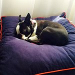 Now THIS is a dog friendly hotel, says Pedro-the-Boston!