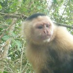 Lots of monkeys on the Panama Canal wildlife tour!