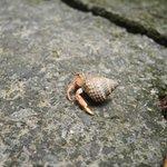 hermit crabs around