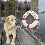 Beau, Assistant Innkeeper of Bay Cottage, St. Michaels, MD